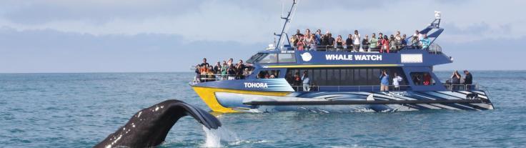 WhaleWatchKaikora